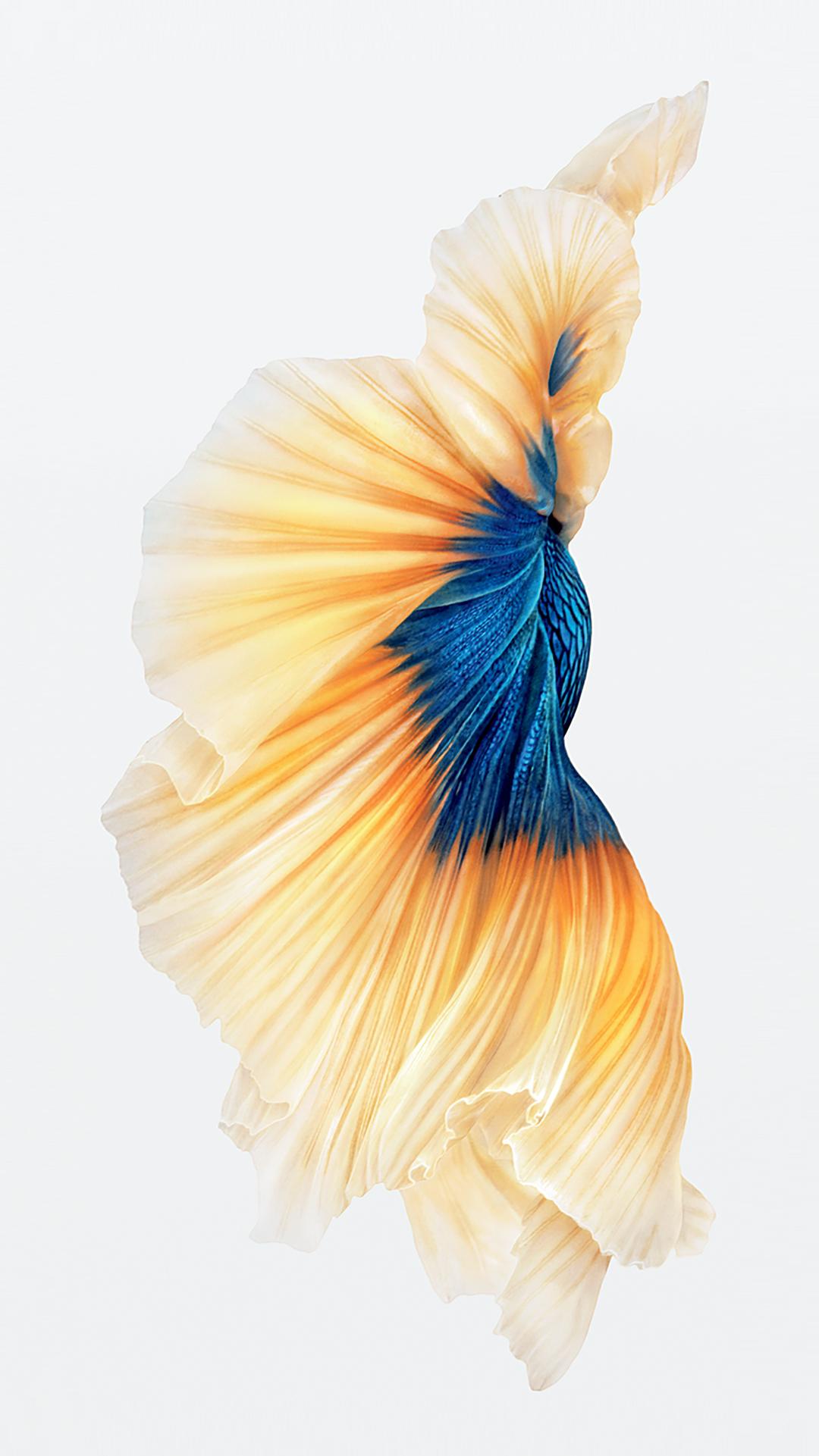 iPhone-6s-Fish-Gold-Wallpaper